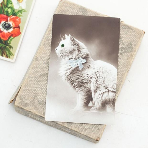 cat-postcard-3-1000x1000