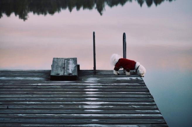 Larkspur Vintage | Photo Diary: Six Mile Lake / 1