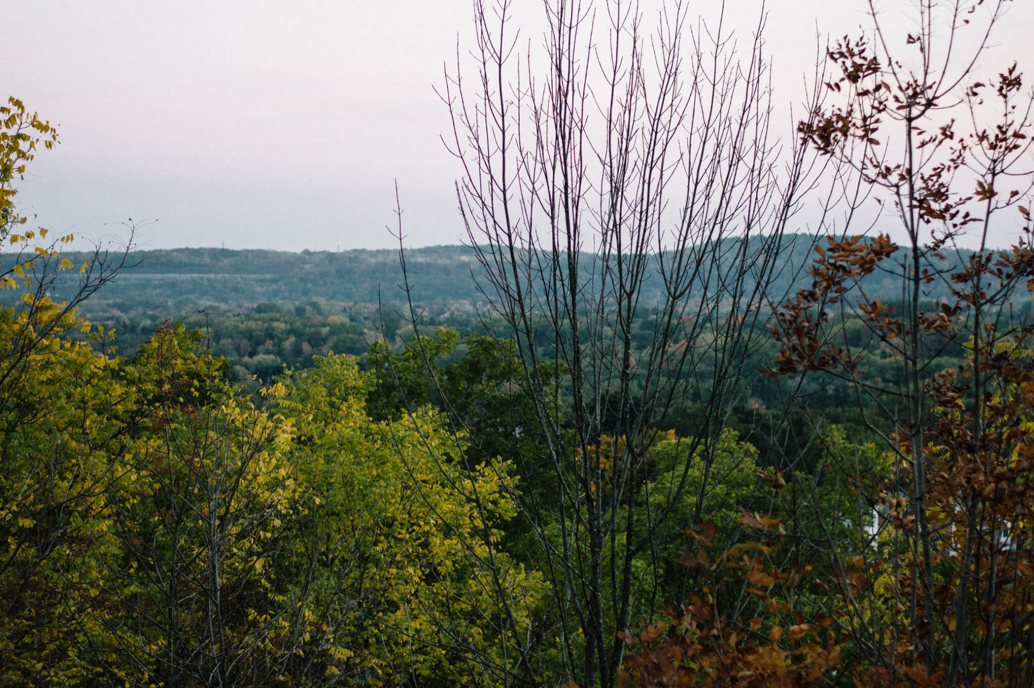 Larkspur Vintage | Photo Diary: Dundas Peak