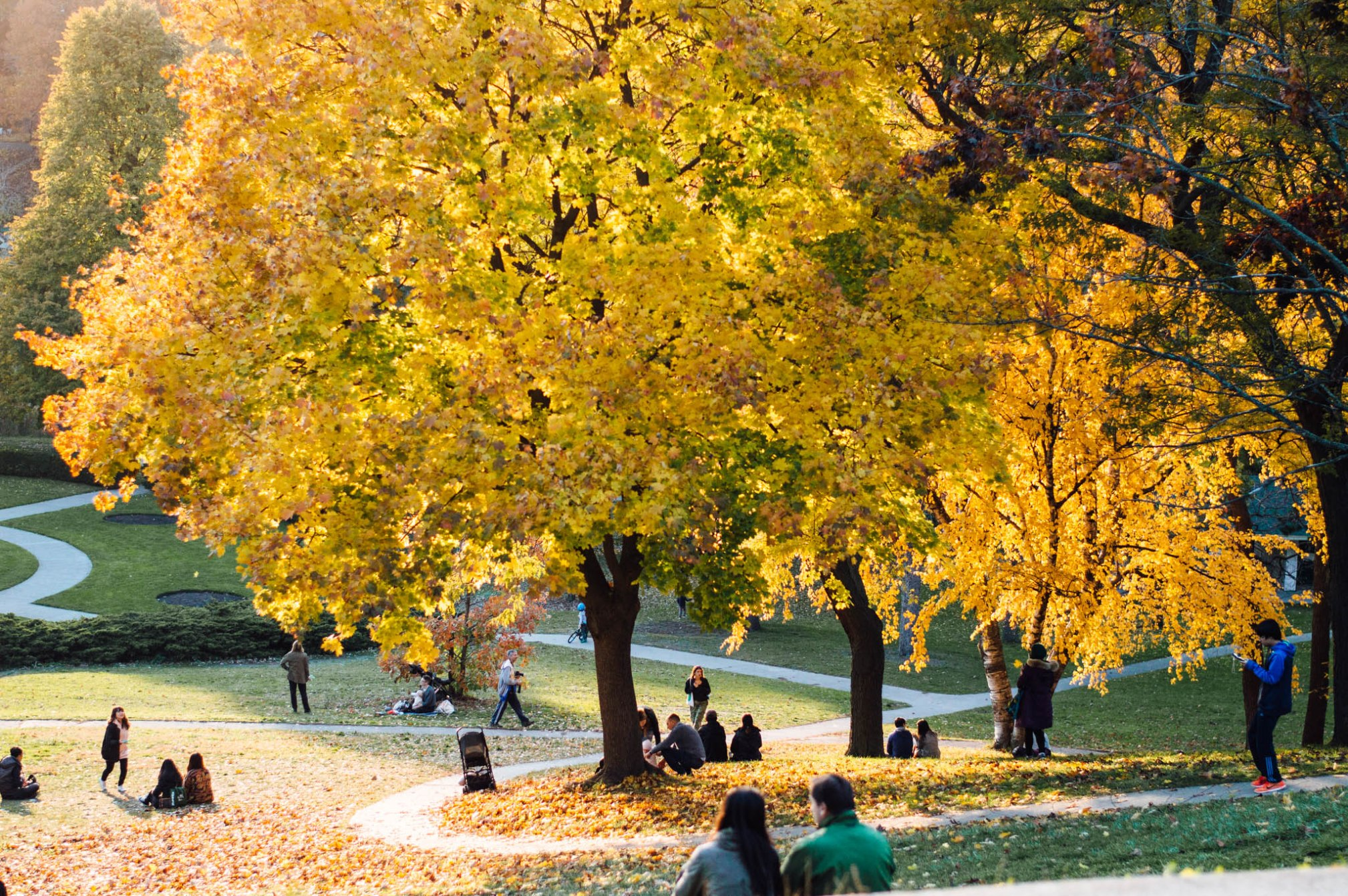 OKAY ANDIE   Photo Diary: High Park in Autumn
